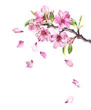 Flowering Cherry Tree. Pink Apple Flowers, Sakura, Almond Flowers On Blooming Branch. Watercolor