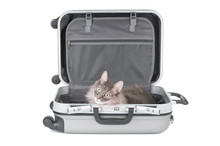 Pretty Cat In Travel Bag On Wh...