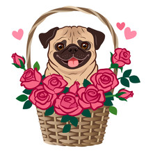 Cute Pug Dog Sitting In A Basket Of Roses Vector Cartoon Illustration Isolated On White. Pets, Love, Friends, Thank You, Romance, Dating, Flirting, Valentine's Day, Birthday Theme Greeting Card.