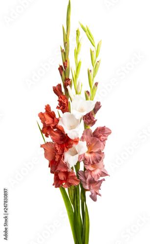 bouquet of gladioli isolated Billede på lærred
