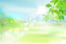 Fresh Green Tree Leaves. Green Meadow. Nature Background. Spring Landscape. Vector Illustration.