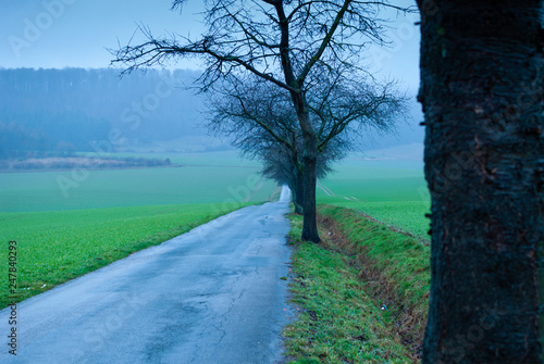 Fotografia  A long straight road with trees on a green foggy field