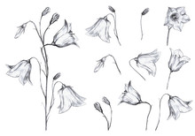 Hand Drawn Floral Set Of Isolt...