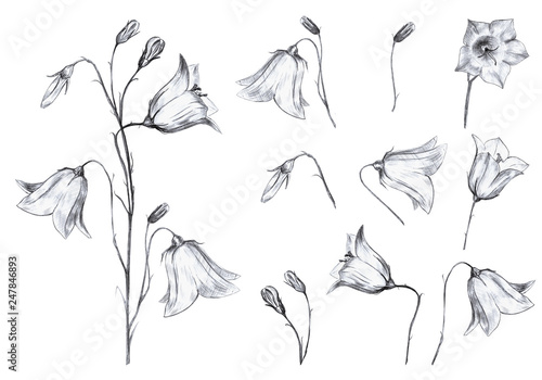 Hand drawn floral set of isolted objects with graphic bluebell flowers and buds Wallpaper Mural