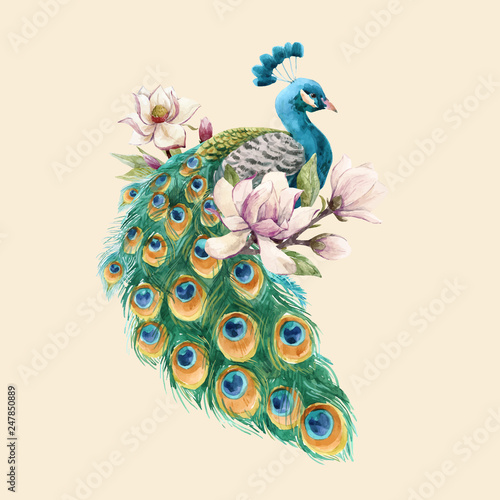 Valokuva Watercolor peacock vector illustration