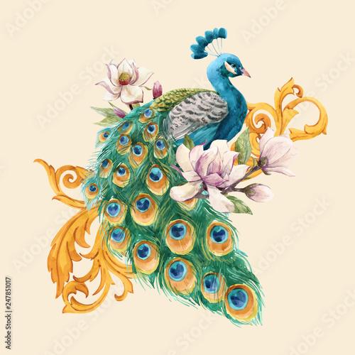 Obraz Watercolor peacock vector illustration - fototapety do salonu
