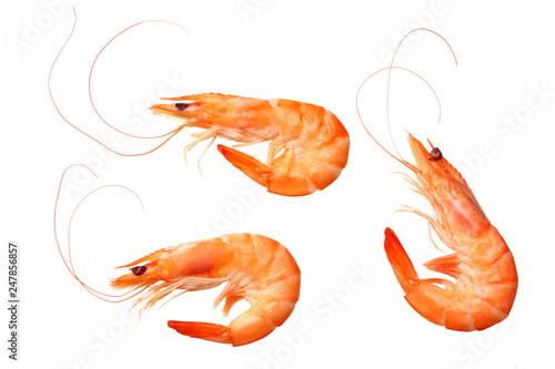 shrimps isolated on a white background. top view Wallpaper Mural