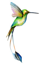 Hummingbird Green Bird. A Little Bird With A Long Tail In Flight. Watercolor Drawing. Isolated Object On White Background.
