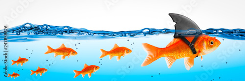 Fotografija Small Brave Goldfish With Shark Fin Costume Leading Others  - Leadership Concept