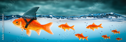 Fotografie, Tablou Small Brave Goldfish With Shark Fin Costume Leading Others Through Stormy Seas -