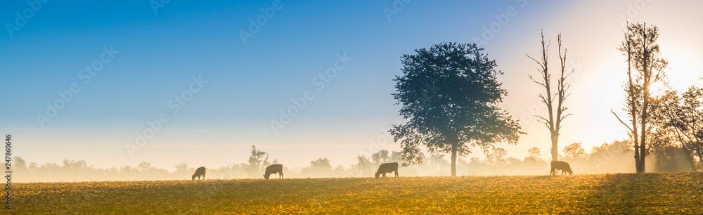 Fototapety, obrazy: Cows Feeding at Sunrise