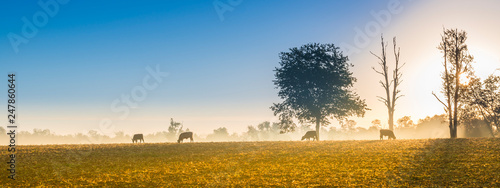 Cows Feeding at Sunrise