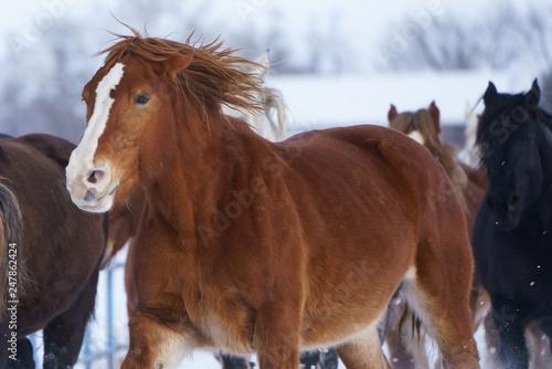 Valokuva 雪原を走る馬