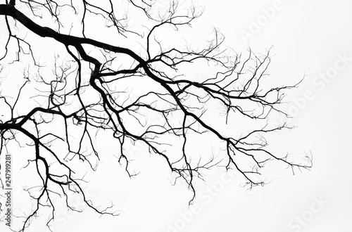 Vászonkép Bare tree branches on a pale white background