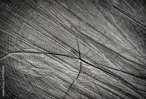 the texture of a wooden slice with cracks Canvas-taulu