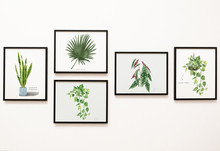 Collection Of Leaves Framed On...
