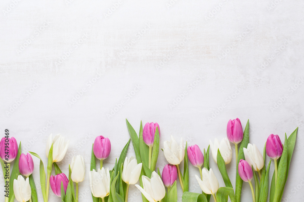 Fototapety, obrazy: Spring greeting card, pastel color tulips on the gray background.