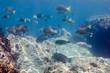 Coral reef scenics of the Sea of Cortez. Cabo Pulmo National Park, Baja California Sur, Mexico. The world's aquarium.