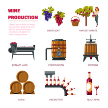 Wine Production Grape Harvest Extract Juice And Fermentation