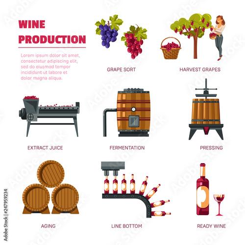 Cuadros en Lienzo  Wine production grape harvest extract juice and fermentation