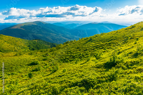 Foto auf AluDibond Pistazie beautiful landscape in mountains. grassy meadow on the hillside. sunny weather. fluffy clouds on the sky