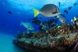 Coral reef scenics of the Sea of Cortez, Baja California Sur, Mexico.