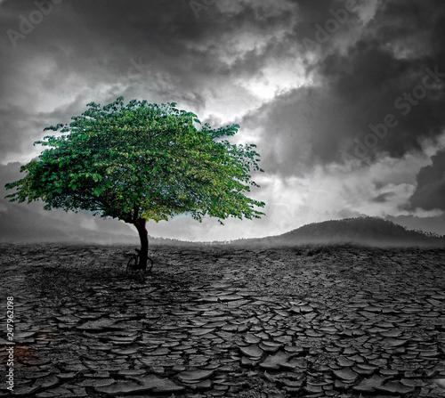 Fototapety, obrazy: Tree at Crack land