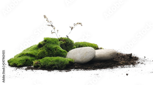 Obraz Green moss with dirt, soil and decorative stone, rock isolated on white background - fototapety do salonu