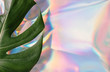 canvas print picture - Iridescent background. Holographic Abstract soft pastel colors backdrop with monstera tropic leaf. Minimal concept.