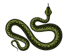 Realistic Green Python Vector ...