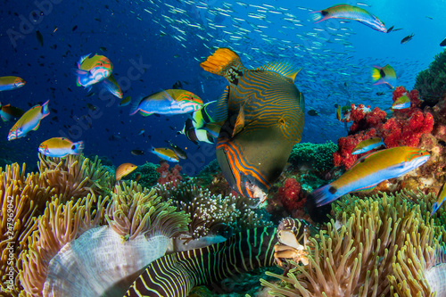 Cuadros en Lienzo Underwater fish on coral reef