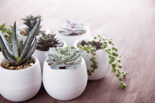 Succulents In Pots On A Wooden...