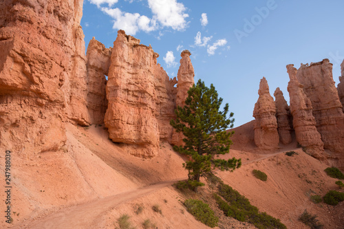 Fotografie, Obraz landscape on the bryce canyon in the united states of america