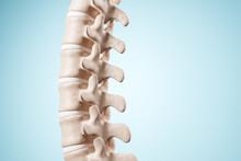 Realistic Human Spine Illustra...