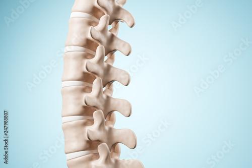 Obraz na plátně  Realistic human spine illustration
