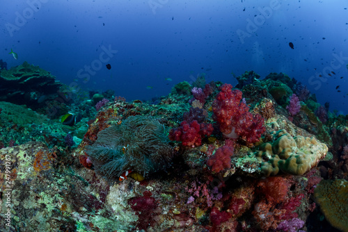 Coral reef fish aquatic life