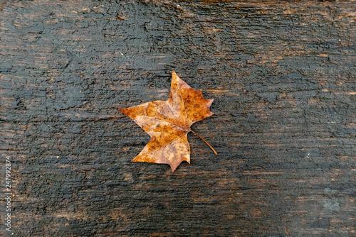Fotografia  detail of wet leaf at a bench