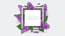 White Square Frame With Purple Lilac Flower And Green Leaf. Vector Illustration For Spring Banner Design, Template For Easter, Nature Or Romantic Designs