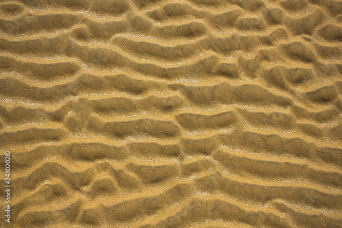 Photo yellow gray sand waves with pieces of seashells close up