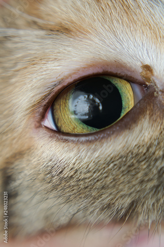 Fotografering  the dehydrated cornea of ​​a cat during ketamine anesthesia because it sleeps wi