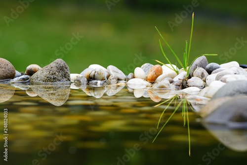 Wasp on water with stones. ...