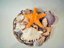 A Set Of Different Seashells A...