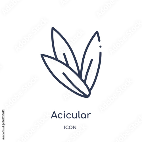 Photo acicular icon from nature outline collection