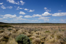 Flat Grassland Landscape With White Clouds, Great Ocean Road, Australia