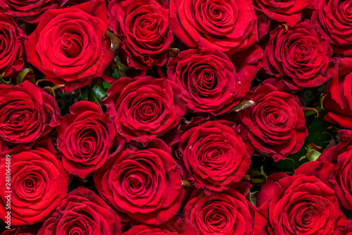 Natural red roses background #248064689