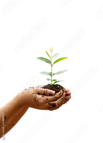 Children`s hands holding young plant isolated on white background. Ecology concept