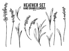 Vector Collection Of Hand Drawn Black And White Heather