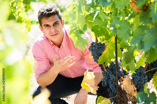 Foto  worker at grape farm