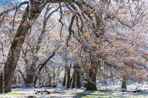 Early spring in Yosemite