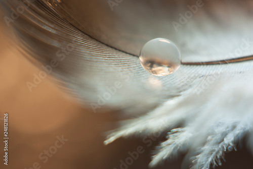 Fotografie, Obraz  A small drop of water reflecting light and Shine on a gray-white feather on a br